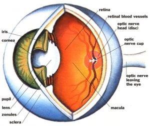 eye stroke