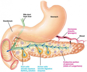 Artificial Pancreas May Improve Overnight Control of Diabetes in Adults