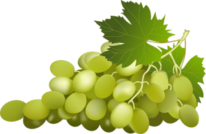 Can Grapes Protect Against Metabolic Syndrome-Related Organ Damage?